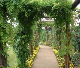 Looking through the pergola at Winthrop